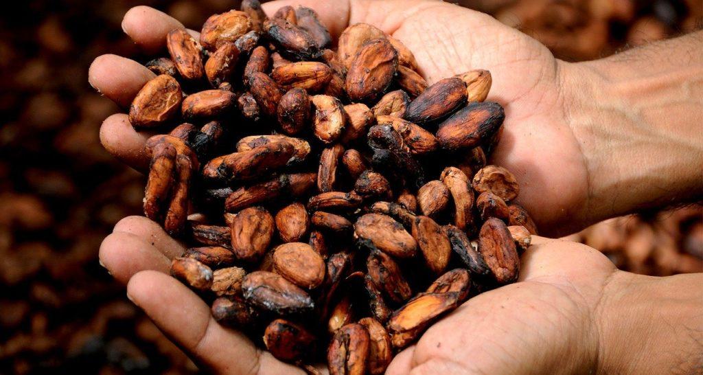 fèves de cacao pour beurre cacao